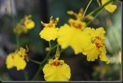 Flora BM 005