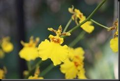 Flora BM 006