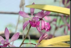Flora BM 009
