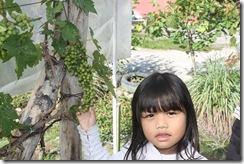 Ladang Anggur Kak CT 13.11.2010 012