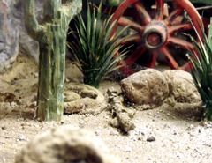 a rattlesnake hiding in the cactus