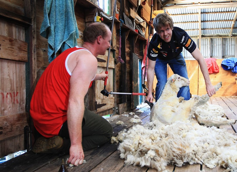 Себастьян Феттель бреет овец на австралийской ферме
