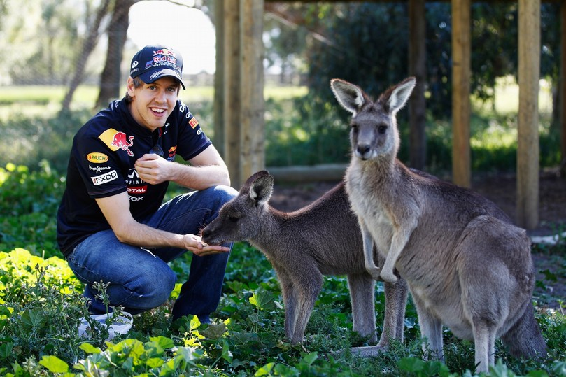 Себастьян Феттель кормит кенгуру на Гран-при Австралии 2011