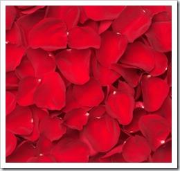 Rose-Petals-redz