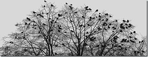 BLOG tree with birds