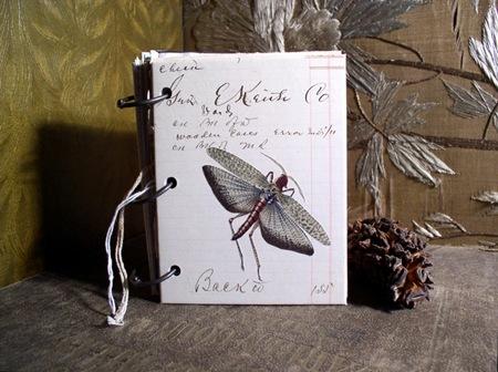 Egyptian locust 72dpi