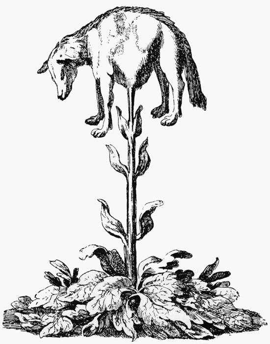 Agnus scythicus
