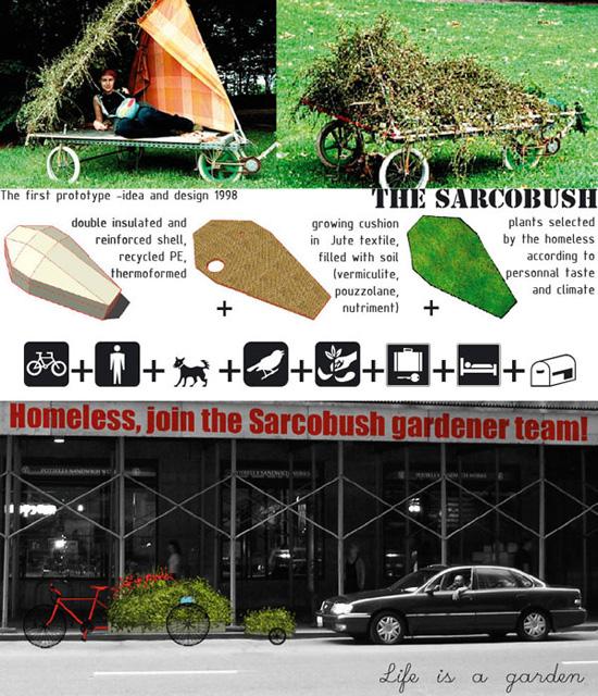Sarcobush