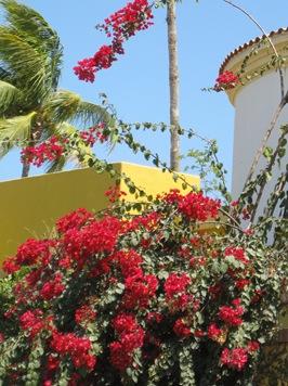 Cabo San Lucas 3 090