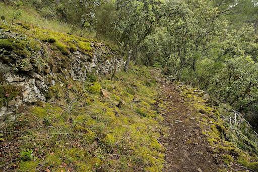 Antic camí ral de Falset a Gratallops, camí de ferradura,Falset, Priorat, Tarragona
