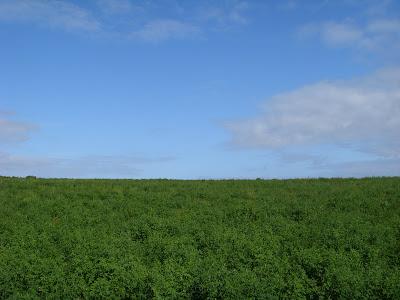 青空と緑の草原