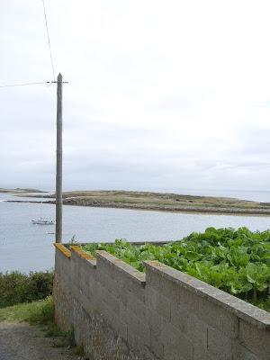 海を臨む畑