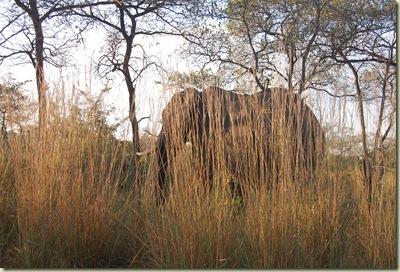 Kruger Park 030