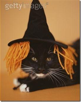 gatos disfrazados (30)