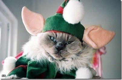 gatos disfrazados (20)