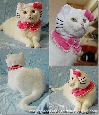 gatos disfrazados (8)