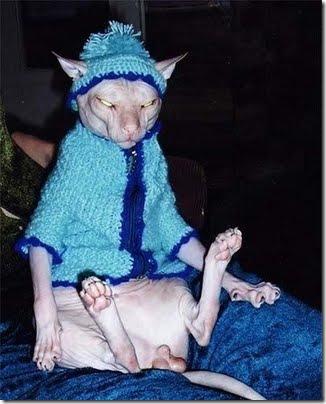 gatos disfrazados (7)
