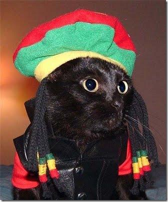 gatos disfrazados (5)