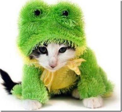 gatos disfrazados (12)