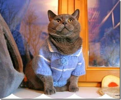 gatos disfrazados (15)