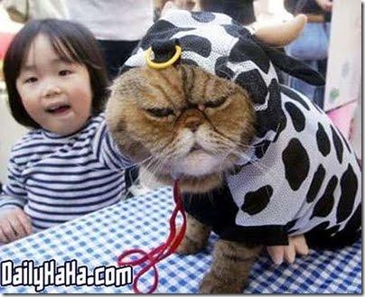 gatos disfrazados (17)