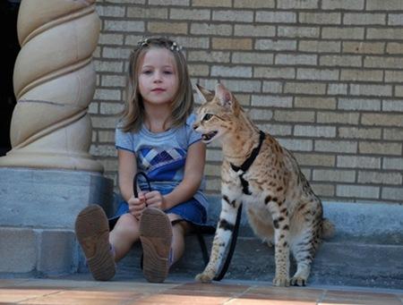 gato miblogdecosasdivertidas (5)