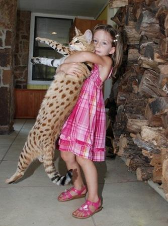 gato miblogdecosasdivertidas