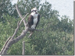 5777 Osprey South Padre Island Texas