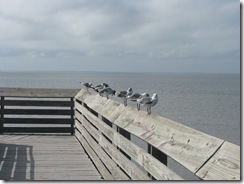 5789 Seagulls South Padre Island Texas