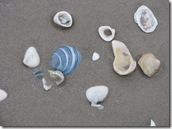 5201 Early Morning Sea Shell Hunting South Padre Island Texas