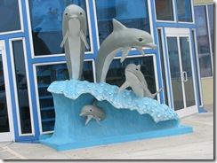 5509 Dolphins at Radio Shack Port Isabel Texas
