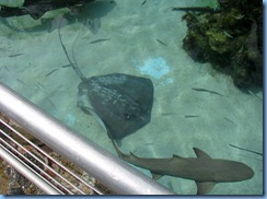 Sting Ray & Shark