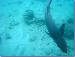 7767 Semi Sub Coral World Charlotte Amalie St Thomas USVI