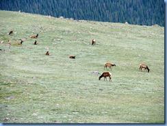 8589 Mule Deer on US 34 EB through RMNP