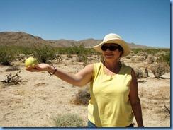 3023 Coyote Melon Joshua Tree National Park CA