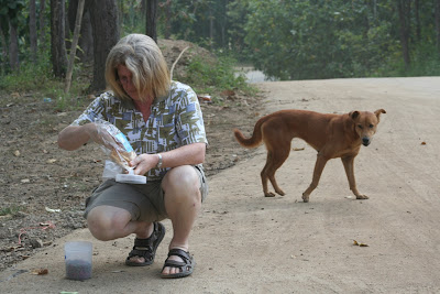 Care for Dogs volunteer Ally Taylor helps capture a dog to be neutered, Wat Doi Kam, Chiang Mai, Thailand. Photograph by Nola Lee Kelsey