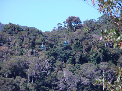 A view of the Skyrail Cableway taken from rail car