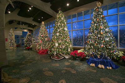 Five of the trees illuminating Meijer Gardens' Christmas Celebration. Photo Courtesy of William J. Hebert