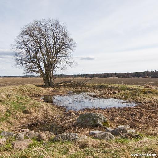 Resterna av Juthögen och en liten damm med källvatten