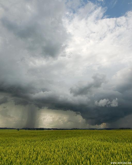 Vetefält med stort regnmoln