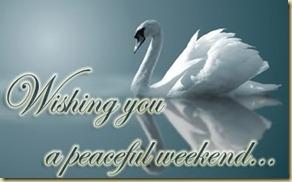 weekend-peaceful-swan