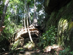 Escada de Pedra e raízes