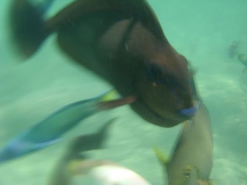 lombok3%20fische5.jpg