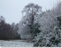 ashdown contrast winter