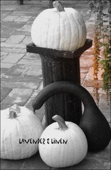 Halloween 2010 129-1