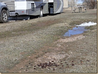 Moose Droppings at Ft Bridger