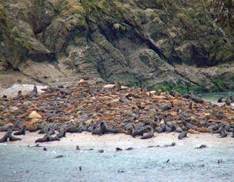 Shell Island Sea Lions