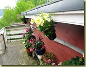 Nye blomster hengt opp 1