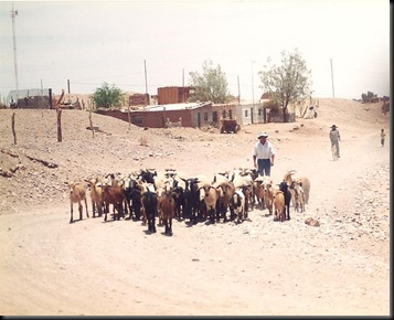 Toconao street view with goats