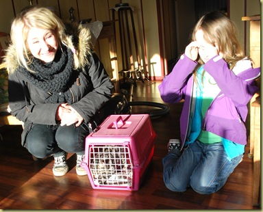 Lillis in Cage with her new humans 1